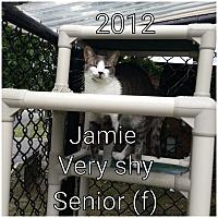 Adopt A Pet :: JAMIE - Smithtown, NY