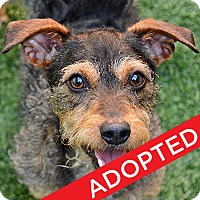 Adopt A Pet :: Evelyn - Burlingame, CA