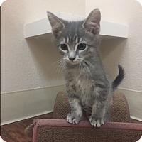 Adopt A Pet :: Sheila - Dublin, CA