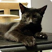 Adopt A Pet :: Dominic - Philadelphia, PA