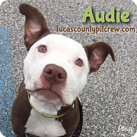 Adopt A Pet :: Audie - Toledo, OH