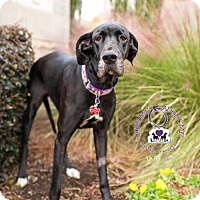 Adopt A Pet :: Riley - Huntersville, NC