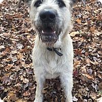 Adopt A Pet :: Bruiser - Walden, NY