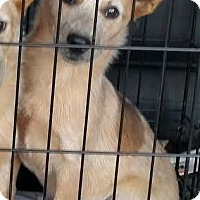 Adopt A Pet :: Annie - Allentown, NJ