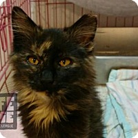 Adopt A Pet :: Spots - Mendota, IL
