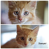 Adopt A Pet :: Scarlet & Sawyer - Jackson, NJ