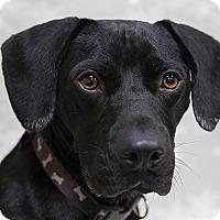 Adopt A Pet :: Leena - Durham, NC