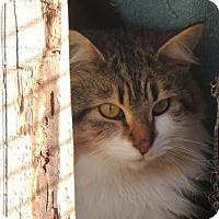 Adopt A Pet :: BOWTIE F-16-785 - Chester, SC