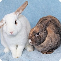 Adopt A Pet :: Wilfred & Sandy (Bonded Pair) - Encinitas, CA