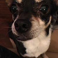 Adopt A Pet :: Rosie - Southeastern, PA