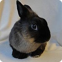 Adopt A Pet :: Sumarok - Los Angeles, CA