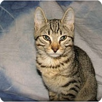 Adopt A Pet :: Freddie - Oxford, NY