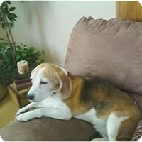 Adopt A Pet :: Skout - Phoenix, AZ