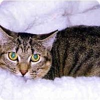 Adopt A Pet :: Packard - Medway, MA