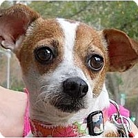Adopt A Pet :: Olivia - Kingwood, TX