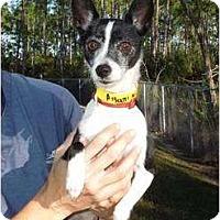 Adopt A Pet :: HOWIE-Adopted!! - Brooksville, FL