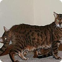 Adopt A Pet :: Balou - IL - Louisville, KY