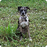 Adopt A Pet :: Kahlua - Lake Worth, FL