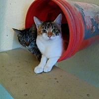 Adopt A Pet :: Bella - Live Oak, FL