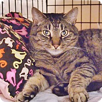 Adopt A Pet :: Tiger - Ocean City, NJ
