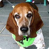 Adopt A Pet :: Flash - Richmond, VA