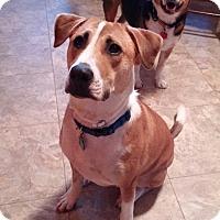 Adopt A Pet :: Blaze - West Bend, WI