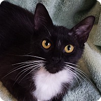 Adopt A Pet :: Laura - Milford, OH