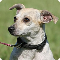 Adopt A Pet :: Camilla - North Fort Myers, FL