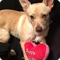 Adopt A Pet :: ZINA - Katy, TX