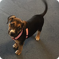 Adopt A Pet :: Janelle - Jupiter, FL