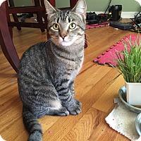 Adopt A Pet :: Tia - Bentonville, AR