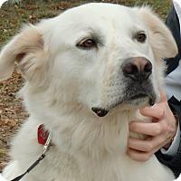 Adopt A Pet :: Blanche - Huntsville, AL