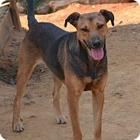 Adopt A Pet :: Elaine - Groton, MA