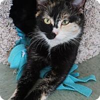 Adopt A Pet :: Mama June - Danielsville, GA