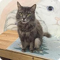 Adopt A Pet :: Smokey - St. James City, FL