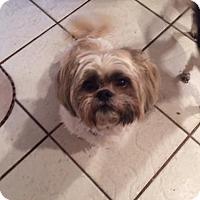 Adopt A Pet :: Thumper - Naples, FL