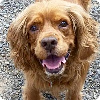 Adopt A Pet :: Rusty - Flushing, NY