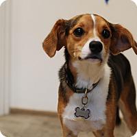 Adopt A Pet :: Gabbi - Nashville, TN