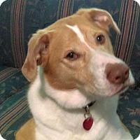 Adopt A Pet :: Daisy - Gilmer, TX