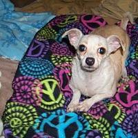 Adopt A Pet :: Scooby - Glendale, AZ