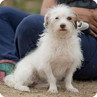 Adopt A Pet :: Patchy - La Jolla, CA