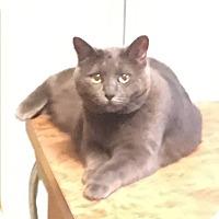 Adopt A Pet :: Grace - Cedar, MN
