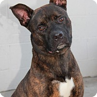 Adopt A Pet :: Blake (CP) - Huntington Beach, CA