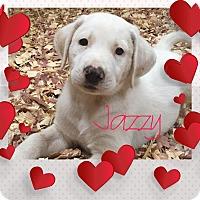 Adopt A Pet :: Jazzy - Buffalo, NY