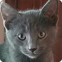 Adopt A Pet :: George - Palatine, IL