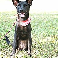 Adopt A Pet :: Peggy - San Mateo, CA