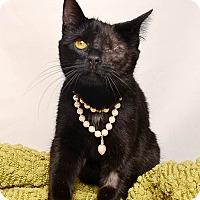 Adopt A Pet :: Willow - Wyandotte, MI