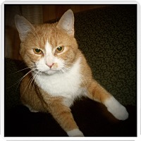 Adopt A Pet :: SCULLY - Medford, WI