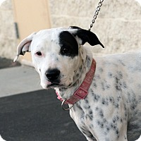 Adopt A Pet :: Seville - Palmdale, CA