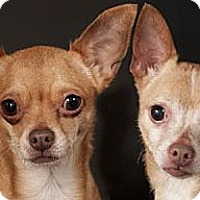 Adopt A Pet :: Mini & Chico - Chicago, IL